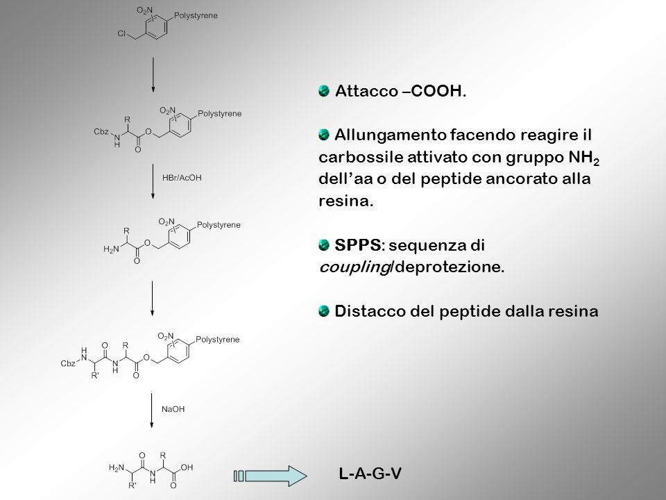 Attacco –COOH.Allungamento facendo reagire il carbossile attivato con gruppo NH2 dell'aa o del peptide ancorato alla resina.