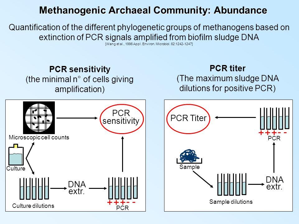 Methanogenic Archaeal Community: Abundance