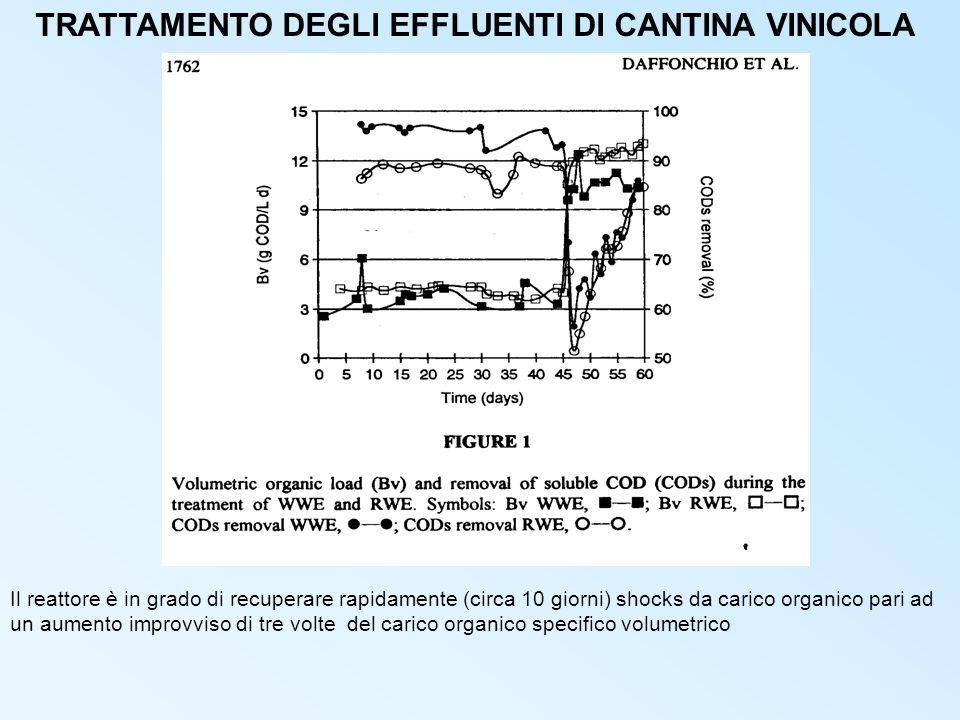 TRATTAMENTO DEGLI EFFLUENTI DI CANTINA VINICOLA