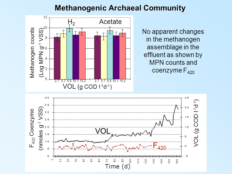 Methanogenic Archaeal Community