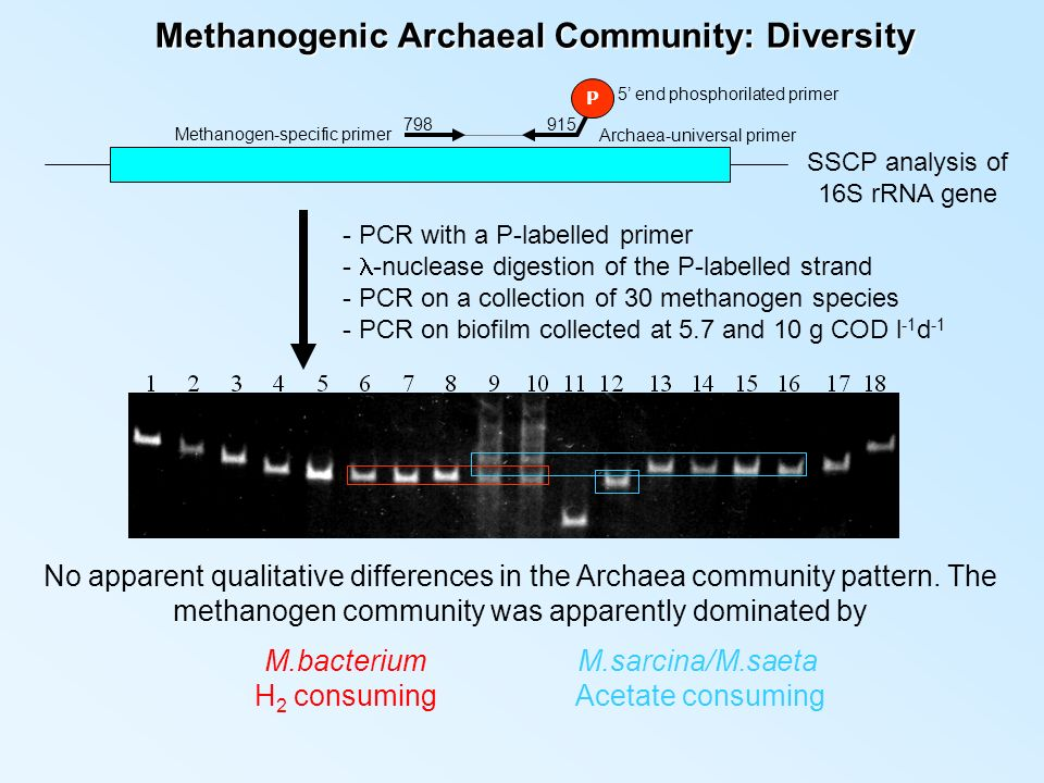 Methanogenic Archaeal Community: Diversity