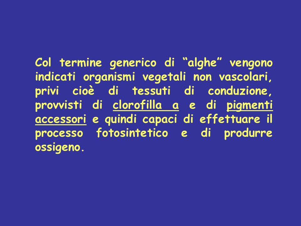Col termine generico di alghe vengono indicati organismi vegetali non vascolari, privi cioè di tessuti di conduzione, provvisti di clorofilla a e di pigmenti accessori e quindi capaci di effettuare il processo fotosintetico e di produrre ossigeno.