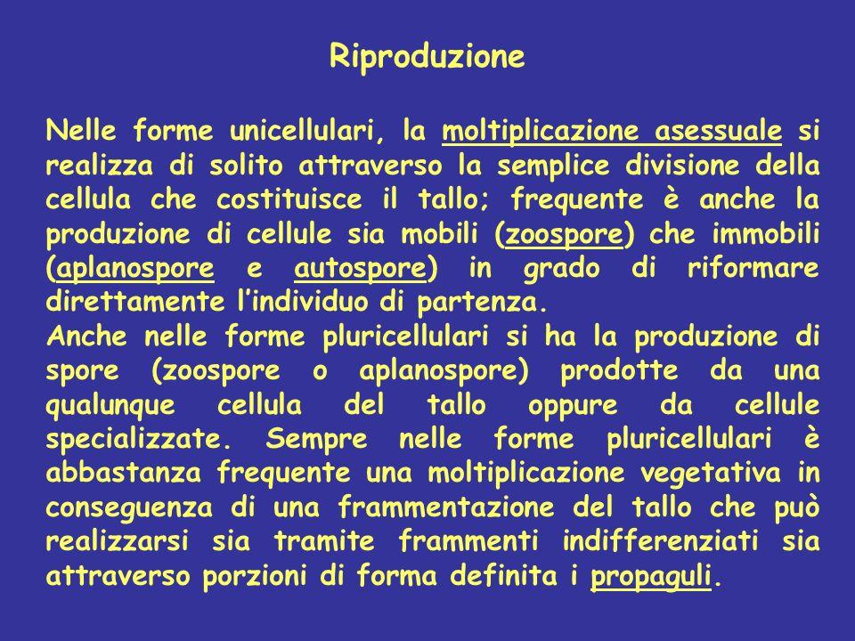 Riproduzione