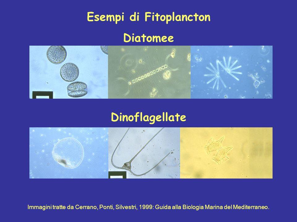 Esempi di Fitoplancton