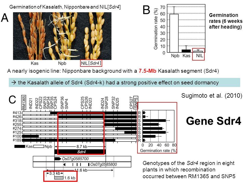 Gene Sdr4 Sugimoto et al. (2010)