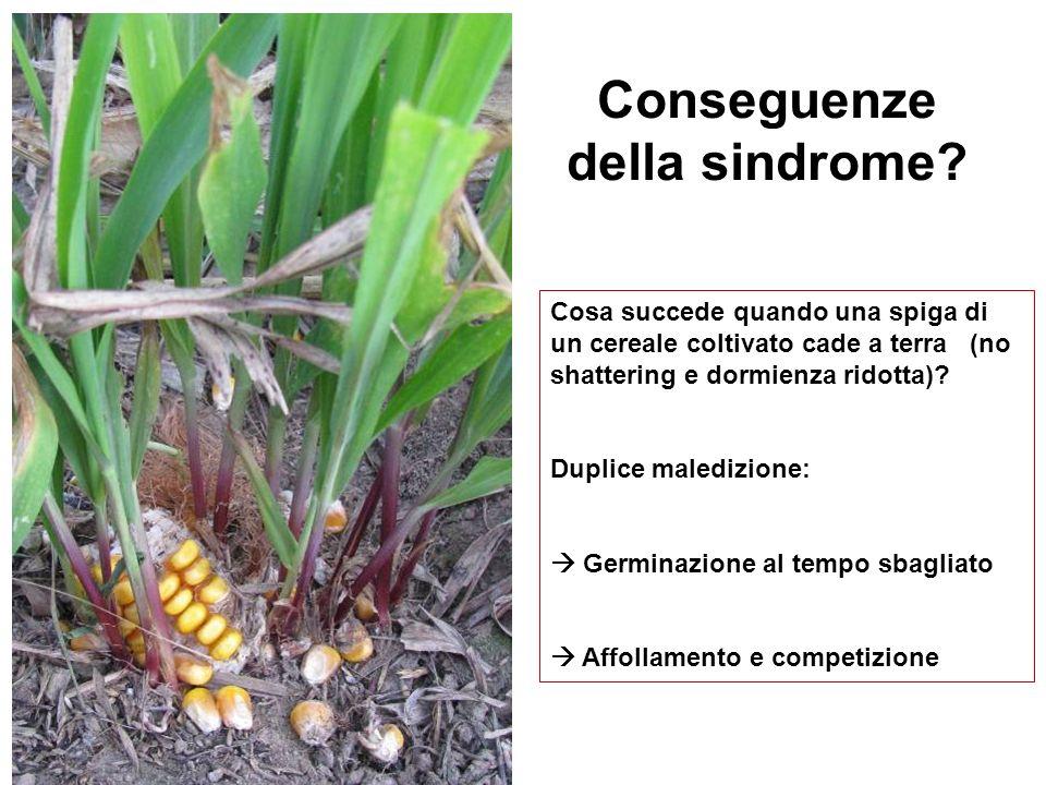 Conseguenze della sindrome