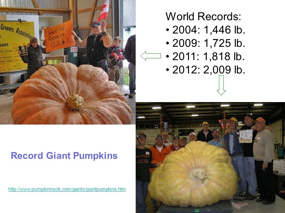 World Records: 2004: 1,446 lb. 2009: 1,725 lb. 2011: 1,818 lb.