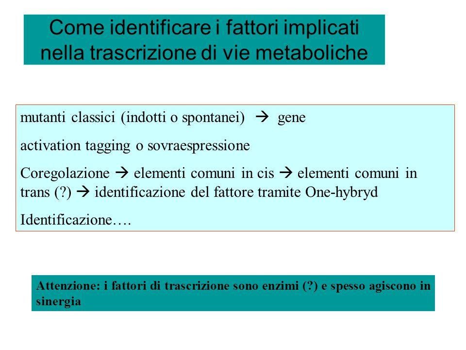 Come identificare i fattori implicati nella trascrizione di vie metaboliche