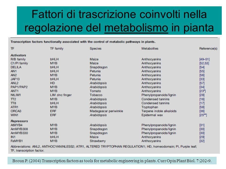 Fattori di trascrizione coinvolti nella regolazione del metabolismo in pianta