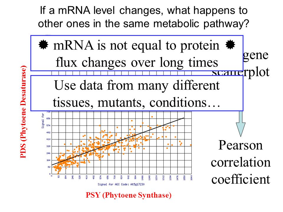  mRNA is not equal to protein  flux changes over long times