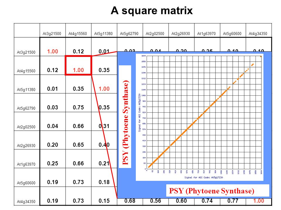 A square matrix PSY (Phytoene Synthase) 1.00 0.12 0.01 0.03 0.04 0.20