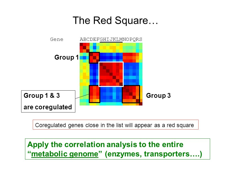 The Red Square… Gene ABCDEFGHIJKLMNOPQRS. Group 1. Group 1 & 3. are coregulated. Group 3.