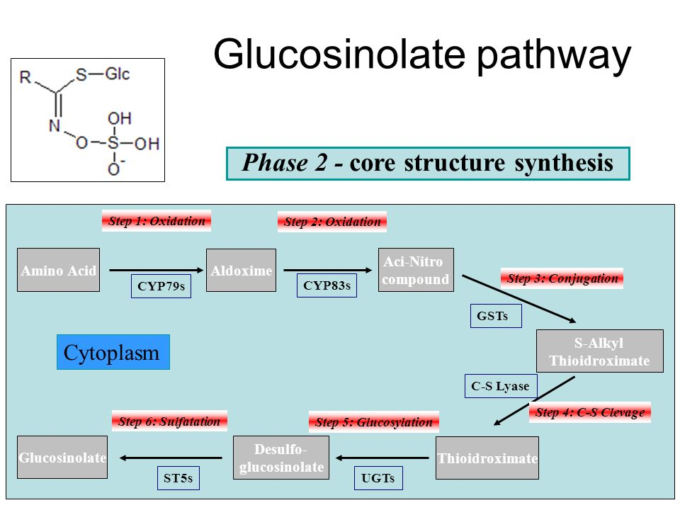 Glucosinolate pathway