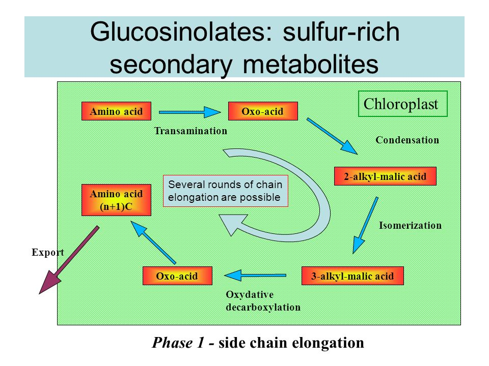 Glucosinolates: sulfur-rich secondary metabolites