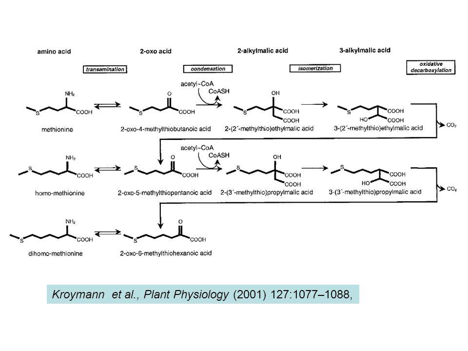 Kroymann et al., Plant Physiology (2001) 127:1077–1088,