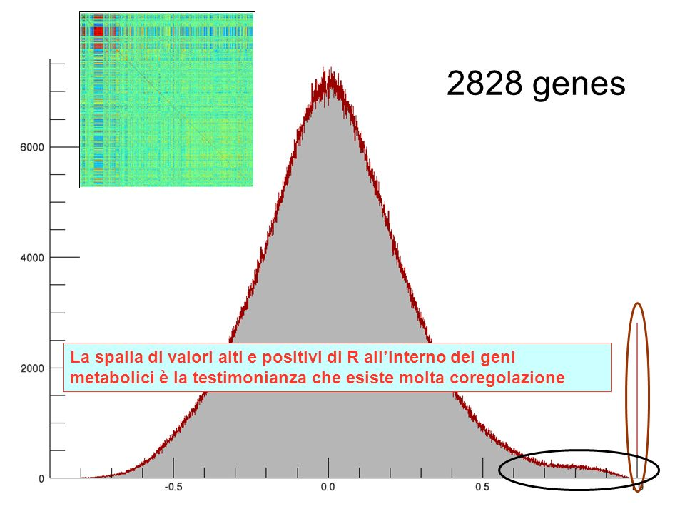 2828 genes What is the distribution of all the R values in the matrix