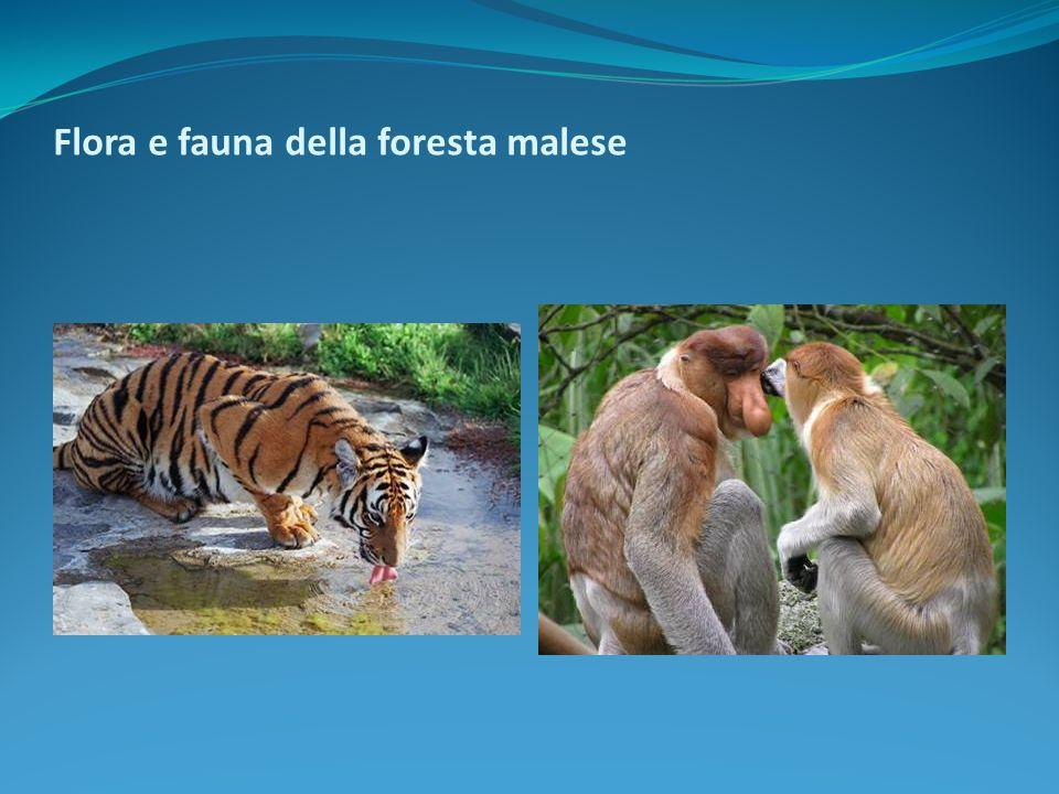 Flora e fauna della foresta malese