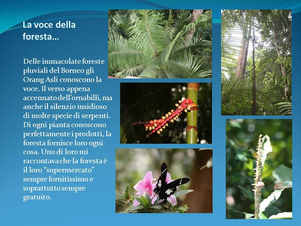 La voce della foresta…
