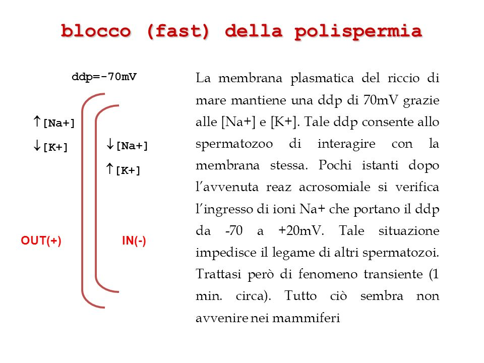 blocco (fast) della polispermia
