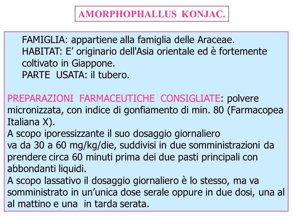 AMORPHOPHALLUS KONJAC.