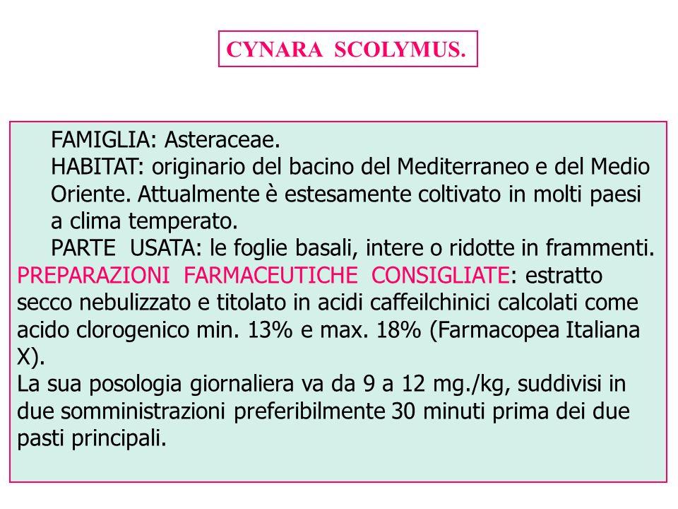 CYNARA SCOLYMUS. FAMIGLIA: Asteraceae.