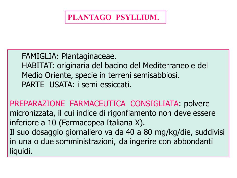 PLANTAGO PSYLLIUM. FAMIGLIA: Plantaginaceae. HABITAT: originaria del bacino del Mediterraneo e del Medio Oriente, specie in terreni semisabbiosi.