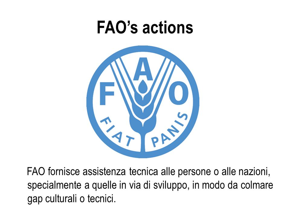 FAO's actions