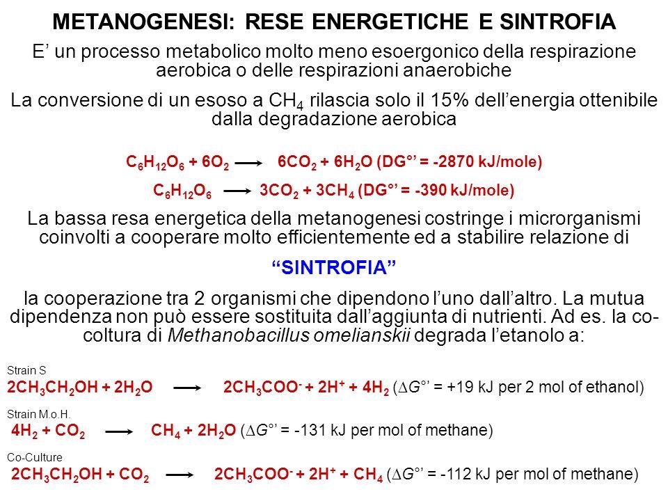 METANOGENESI: RESE ENERGETICHE E SINTROFIA