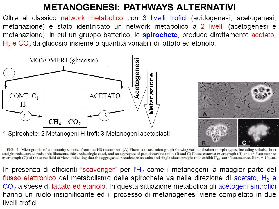 METANOGENESI: PATHWAYS ALTERNATIVI
