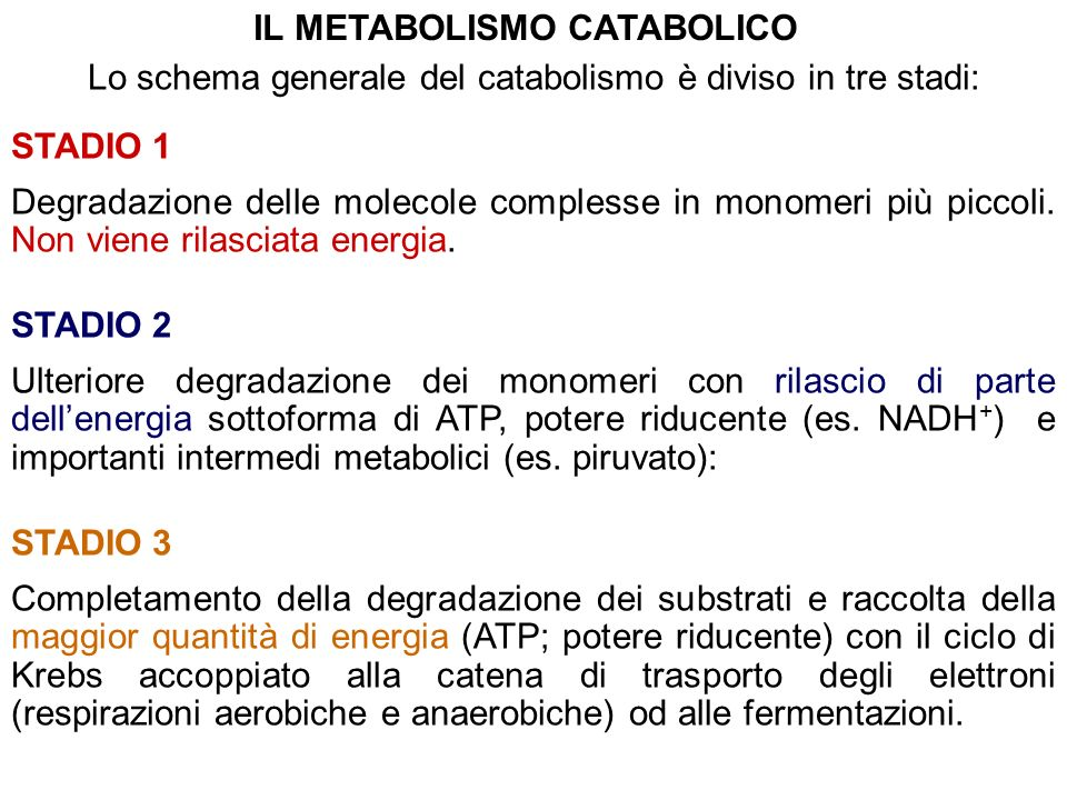IL METABOLISMO CATABOLICO
