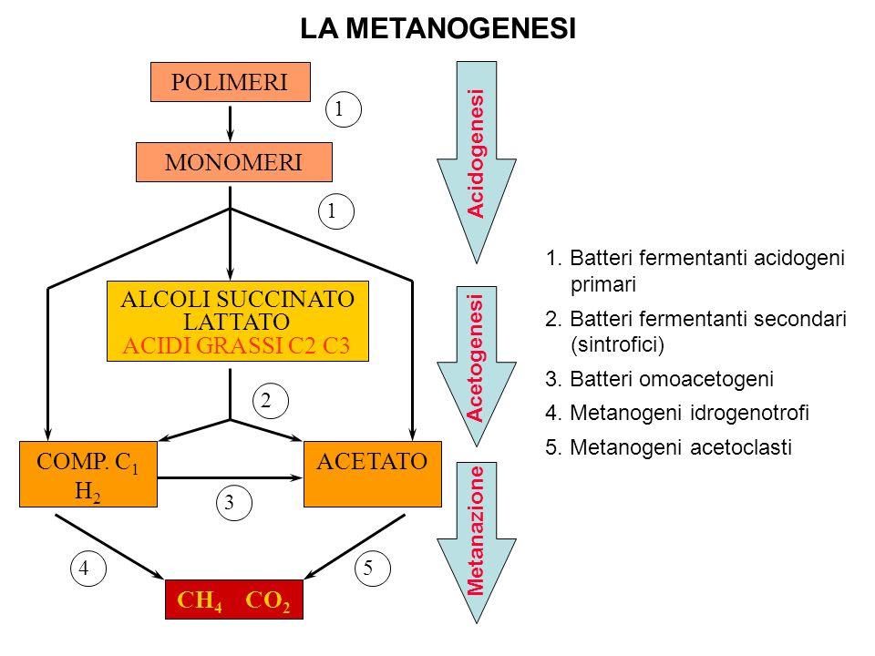 LA METANOGENESI POLIMERI MONOMERI ALCOLI SUCCINATO LATTATO