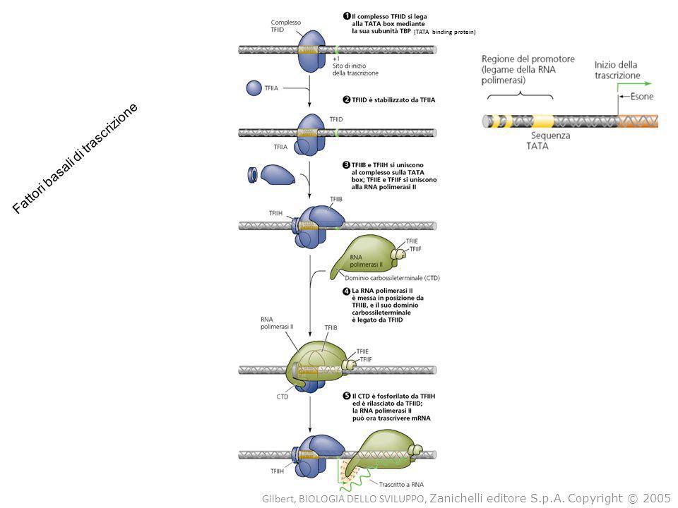 Fattori basali di trascrizione