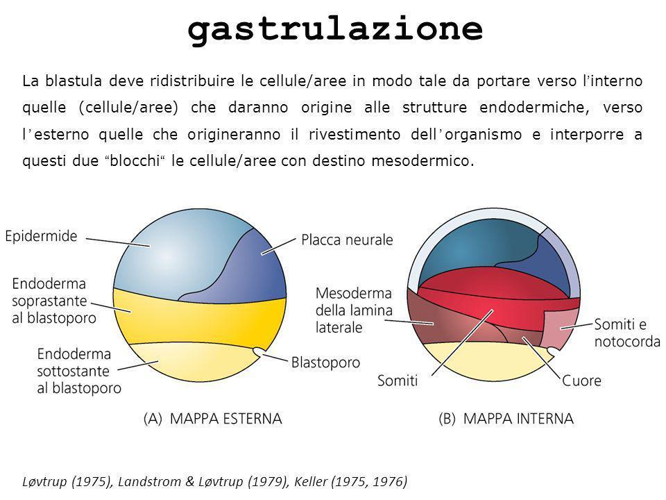 gastrulazione
