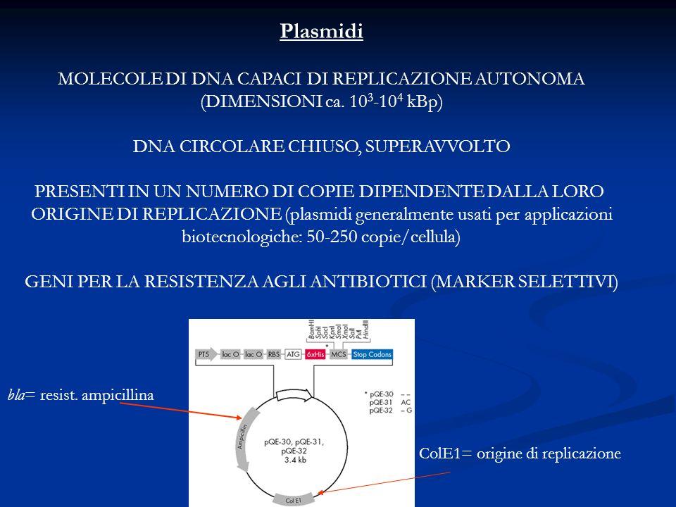 Plasmidi MOLECOLE DI DNA CAPACI DI REPLICAZIONE AUTONOMA