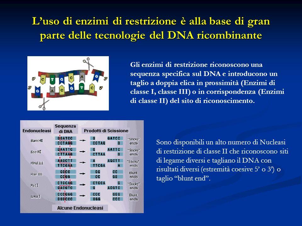 L'uso di enzimi di restrizione è alla base di gran parte delle tecnologie del DNA ricombinante