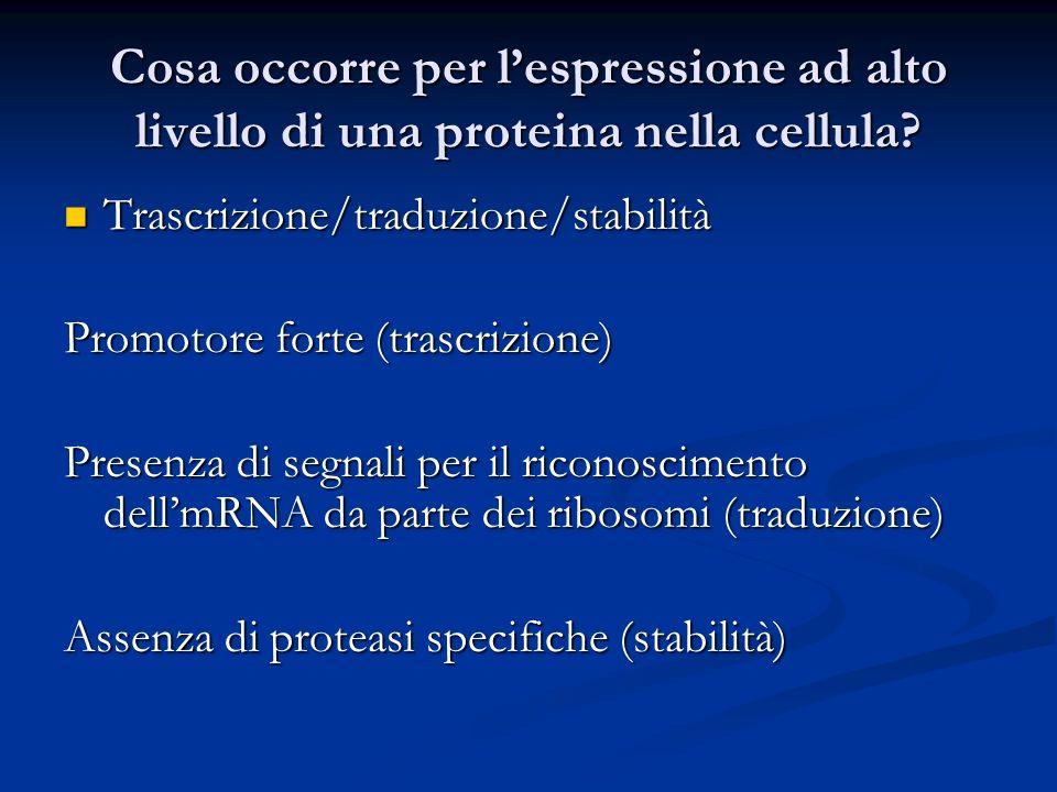 Cosa occorre per l'espressione ad alto livello di una proteina nella cellula