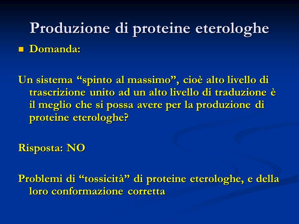 Produzione di proteine eterologhe