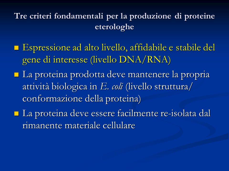 Tre criteri fondamentali per la produzione di proteine eterologhe