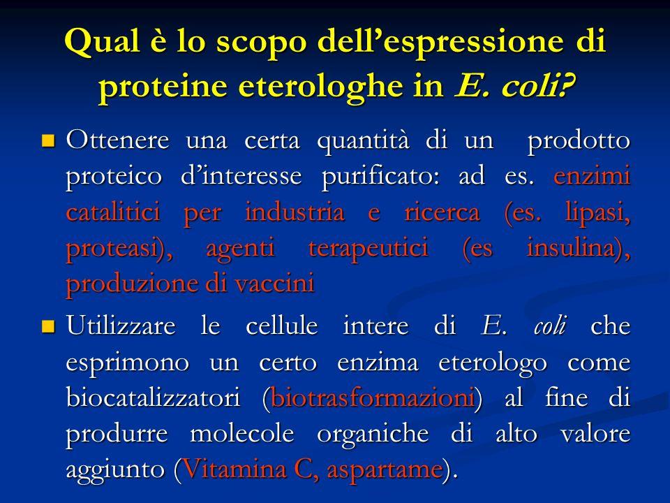 Qual è lo scopo dell'espressione di proteine eterologhe in E. coli