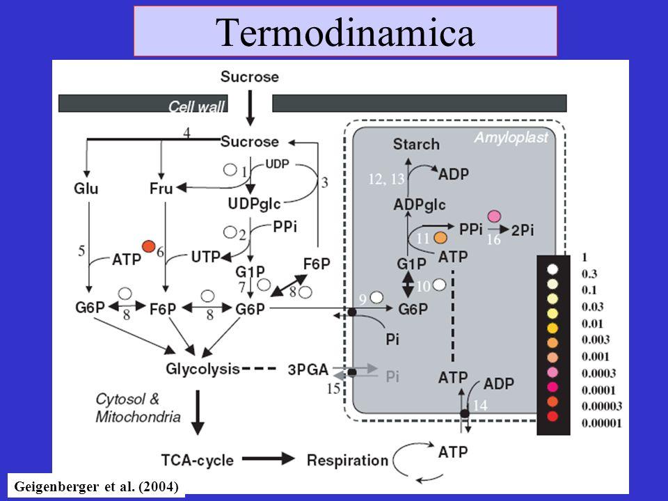 Termodinamica Geigenberger et al. (2004)