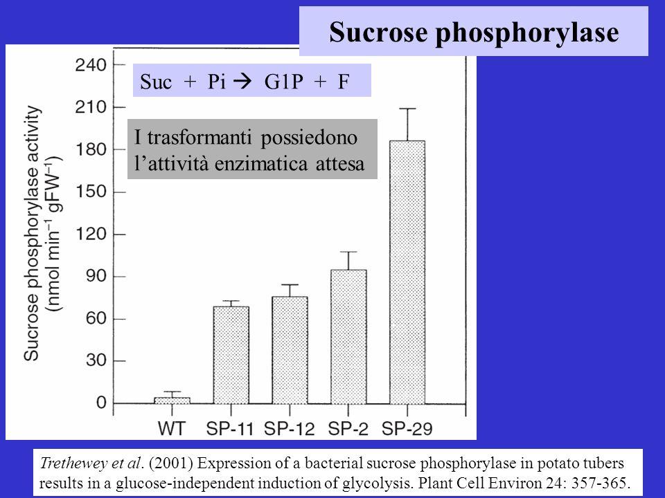 Sucrose phosphorylase