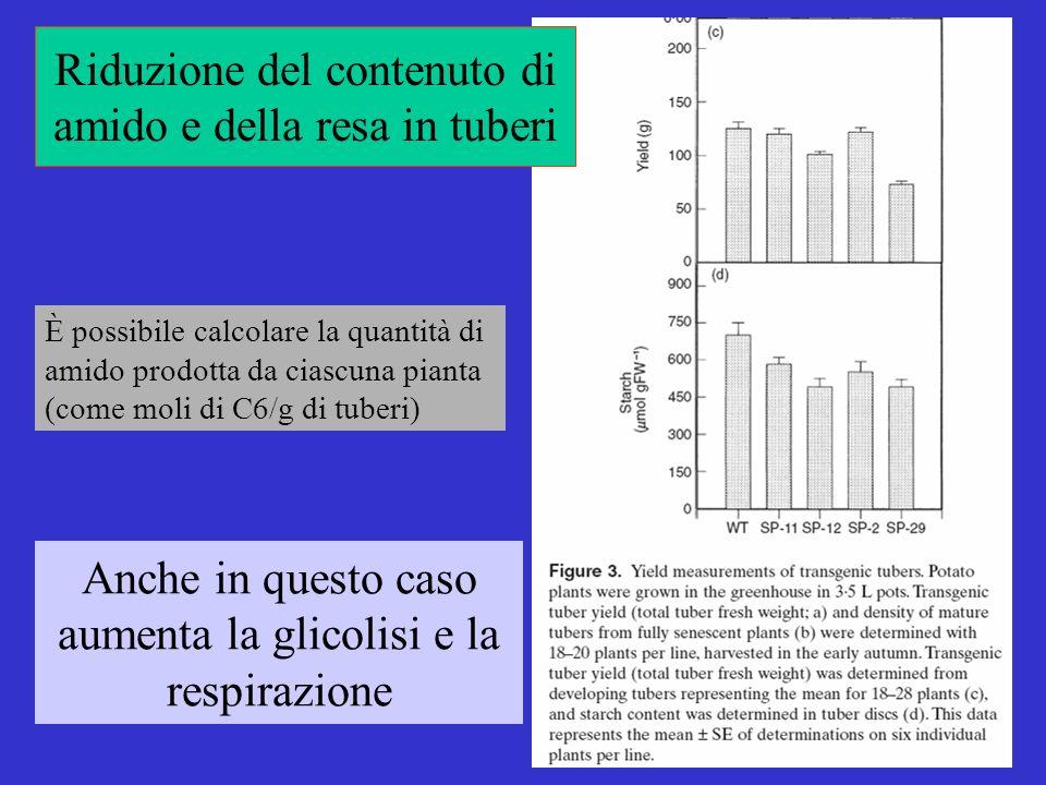 Riduzione del contenuto di amido e della resa in tuberi