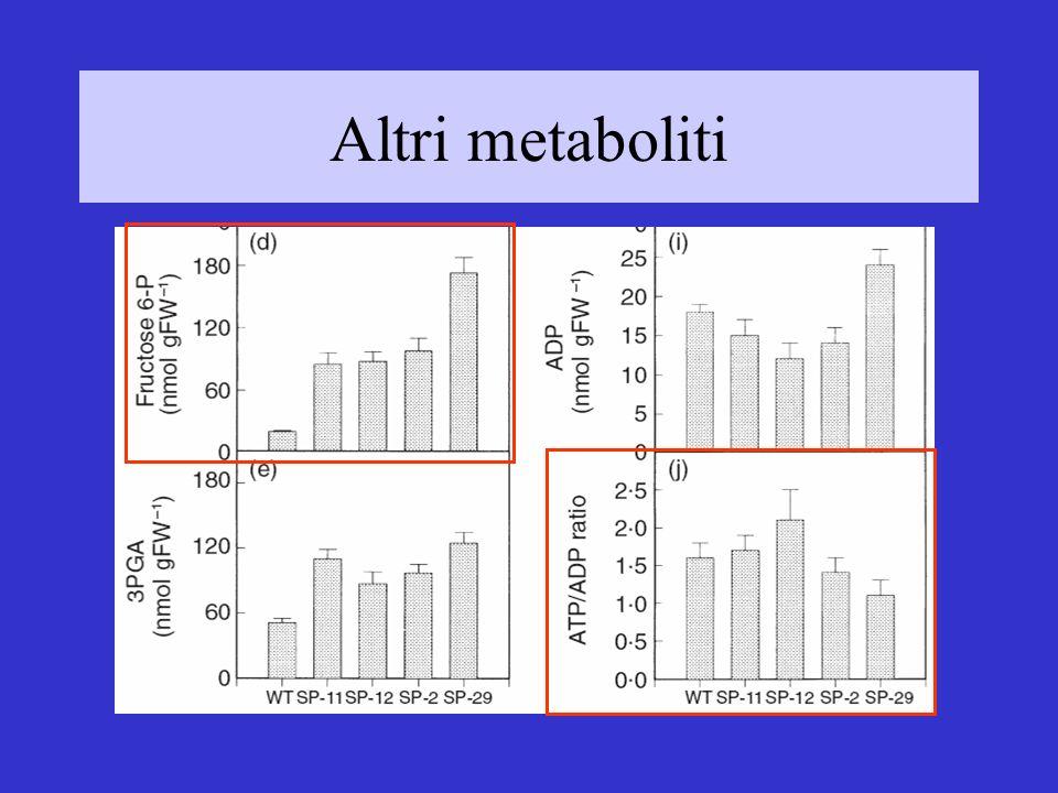 Altri metaboliti