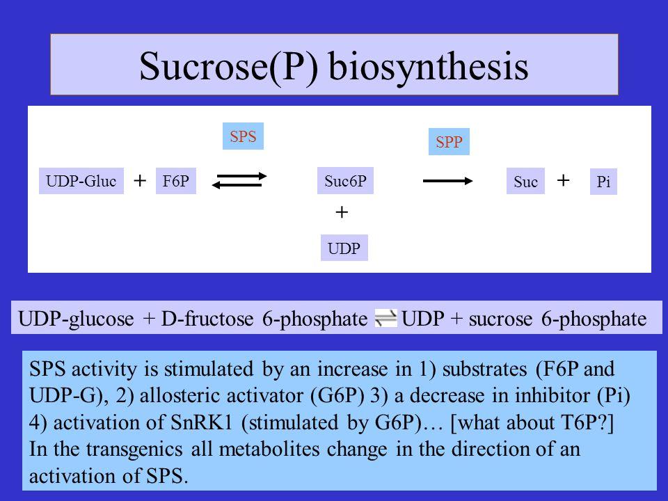 Sucrose(P) biosynthesis