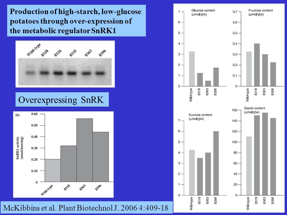 Production of high-starch, low-glucose potatoes through over-expression of the metabolic regulator SnRK1