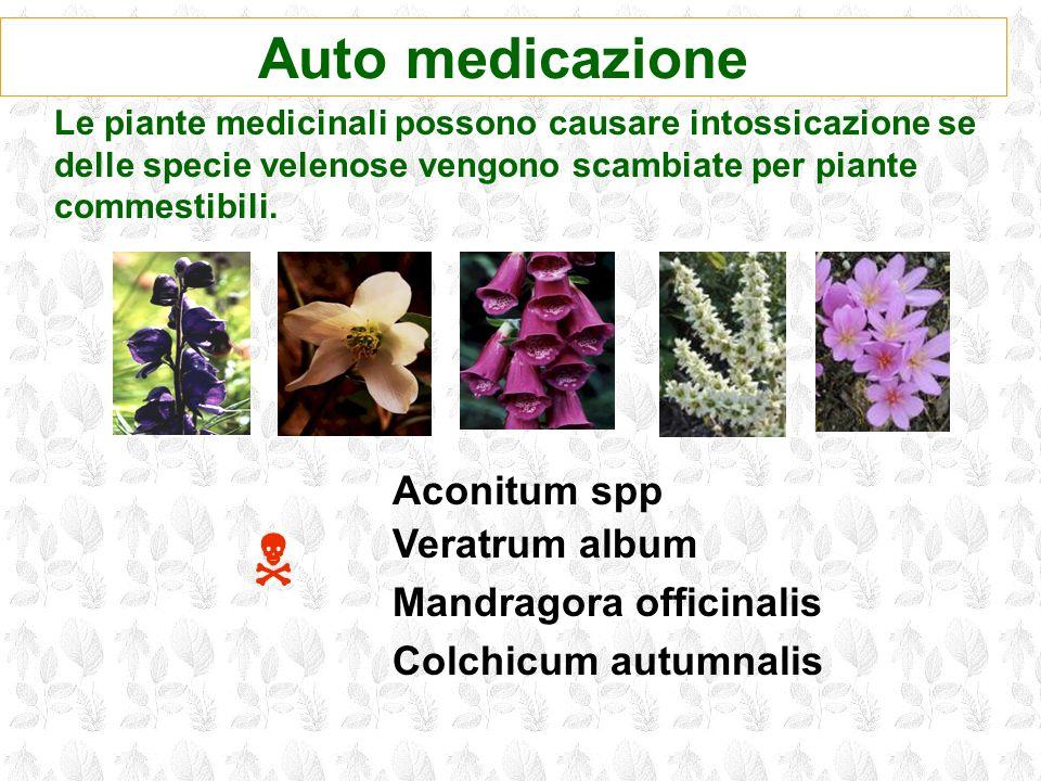 N Auto medicazione Aconitum spp Veratrum album Mandragora officinalis