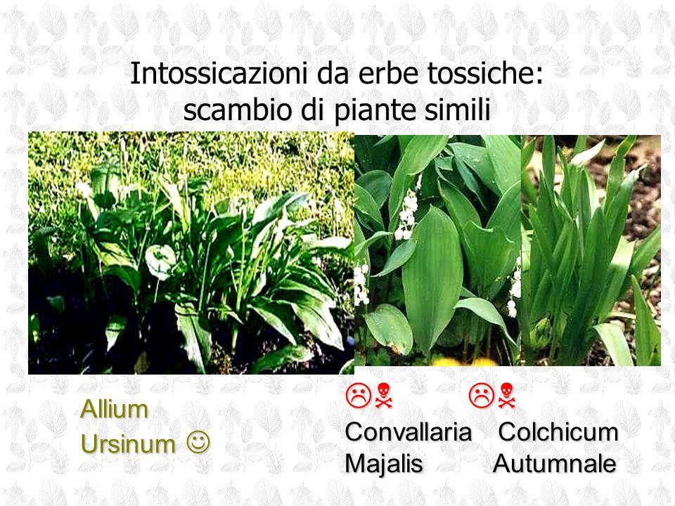 N N Intossicazioni da erbe tossiche: scambio di piante simili Allium