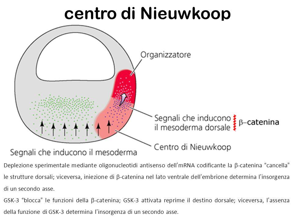 centro di Nieuwkoop
