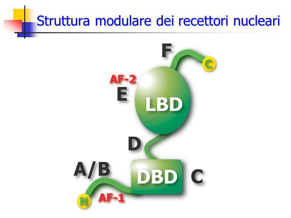Struttura modulare dei recettori nucleari