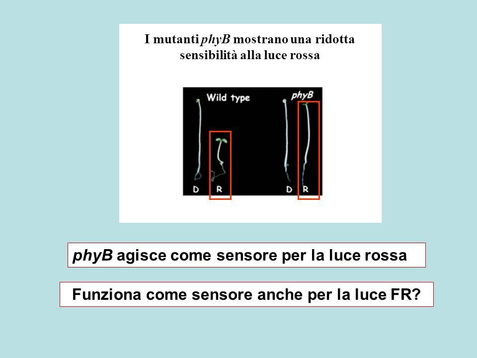 Funziona come sensore anche per la luce FR